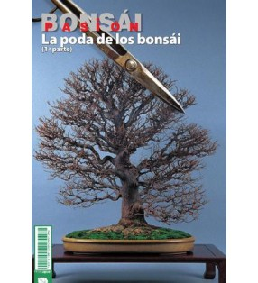 BONSAI PASION Nº80