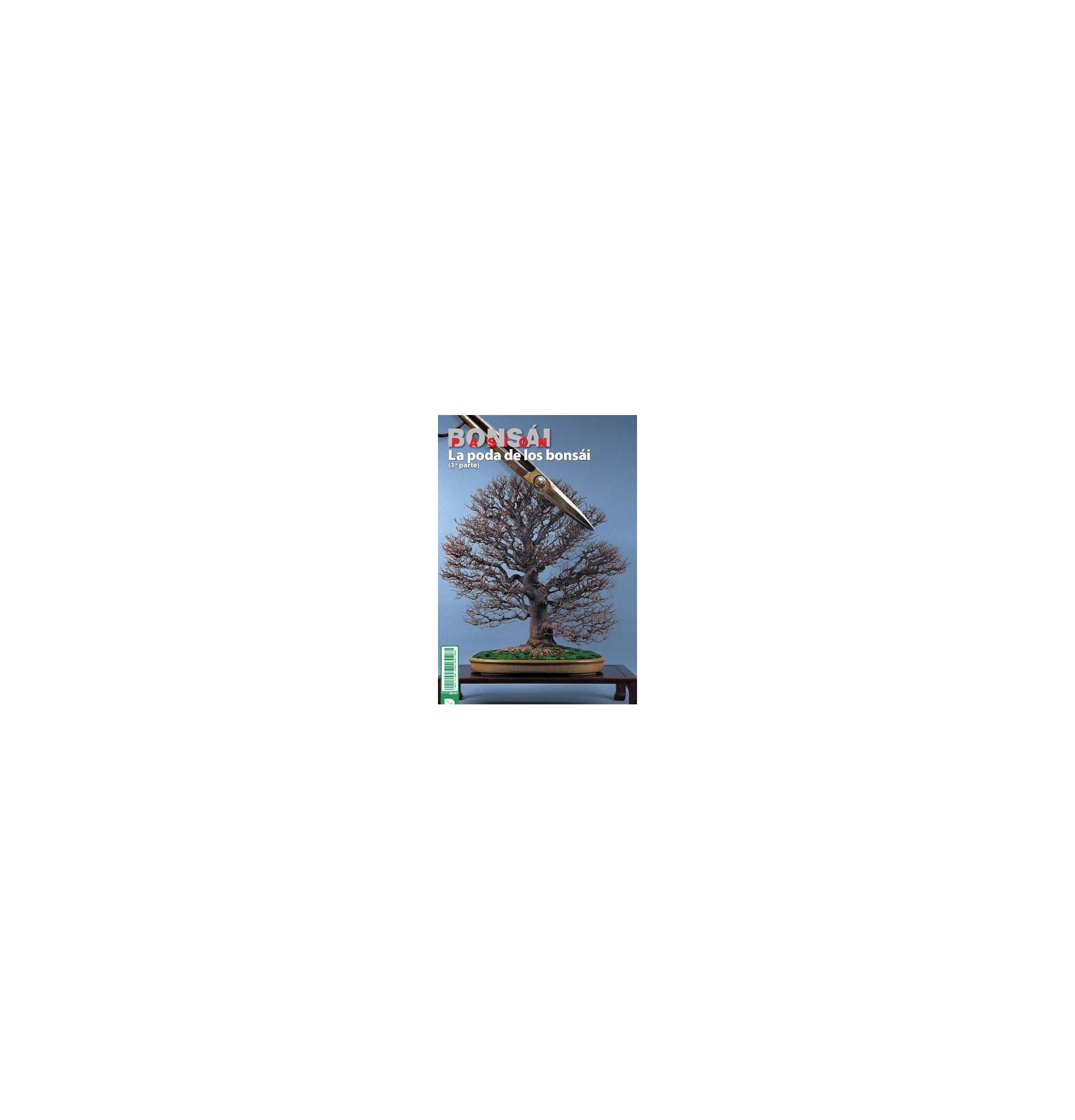 BONSAI PASION Nº80