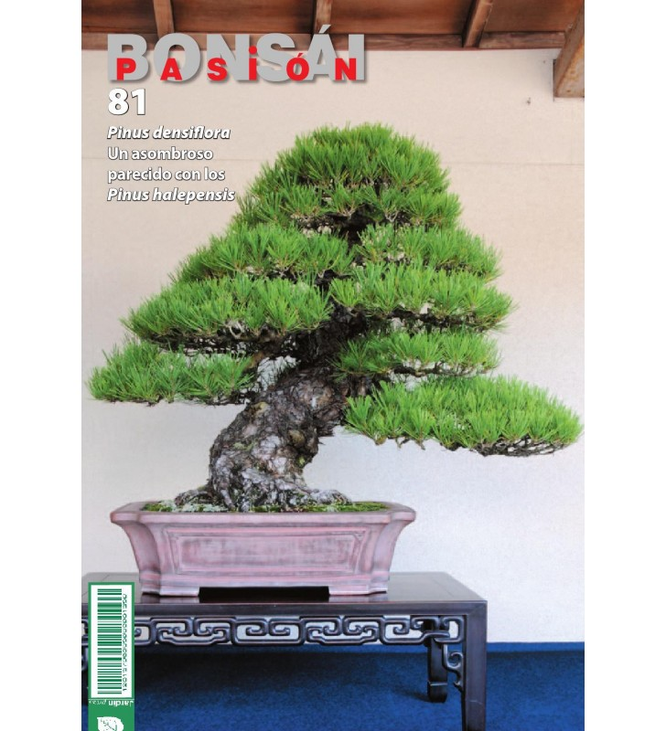 BONSAI PASION Nº81