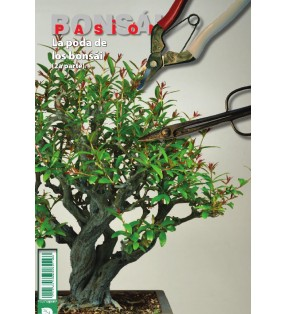 BONSAI PASION Nº83