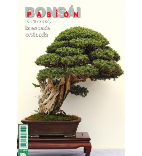 BONSAI PASION Nº84