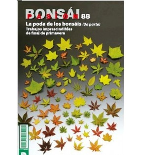 BONSAI PASION Nº88
