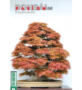 BONSAI PASION 85