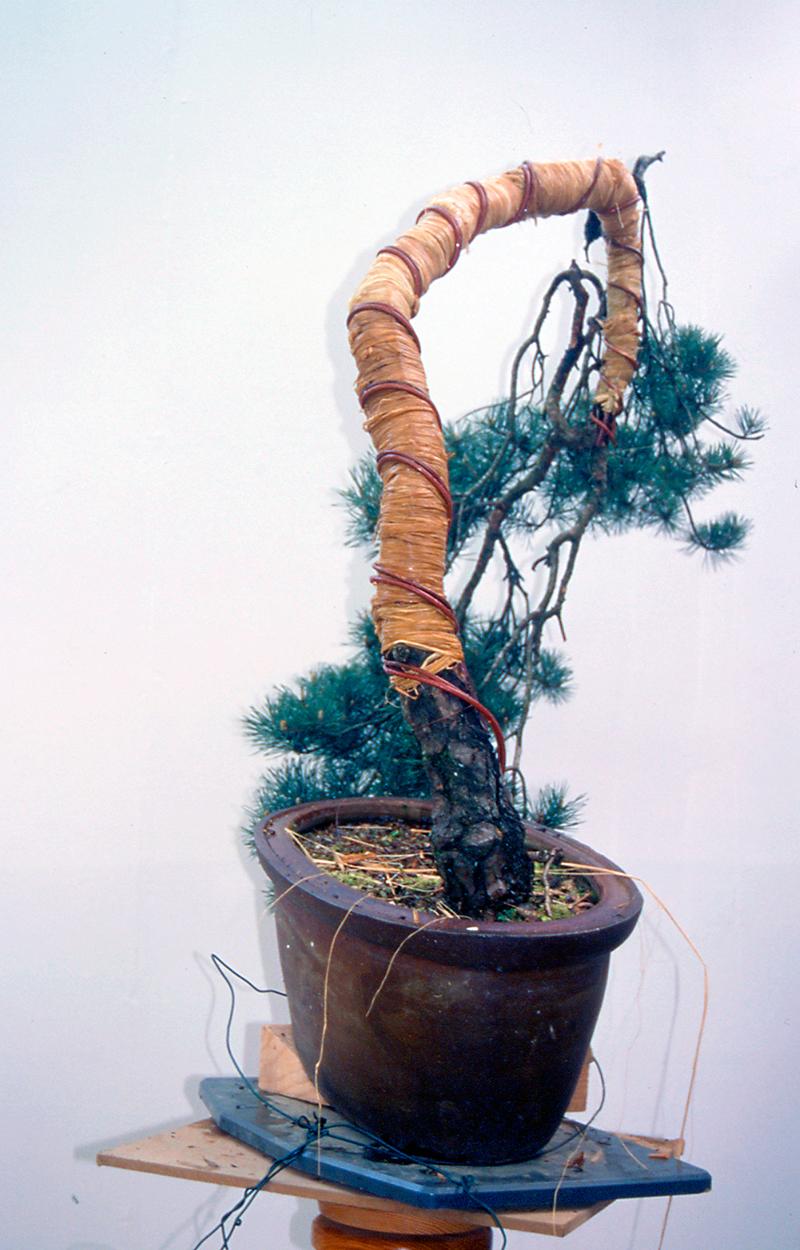 se alambra el tronco