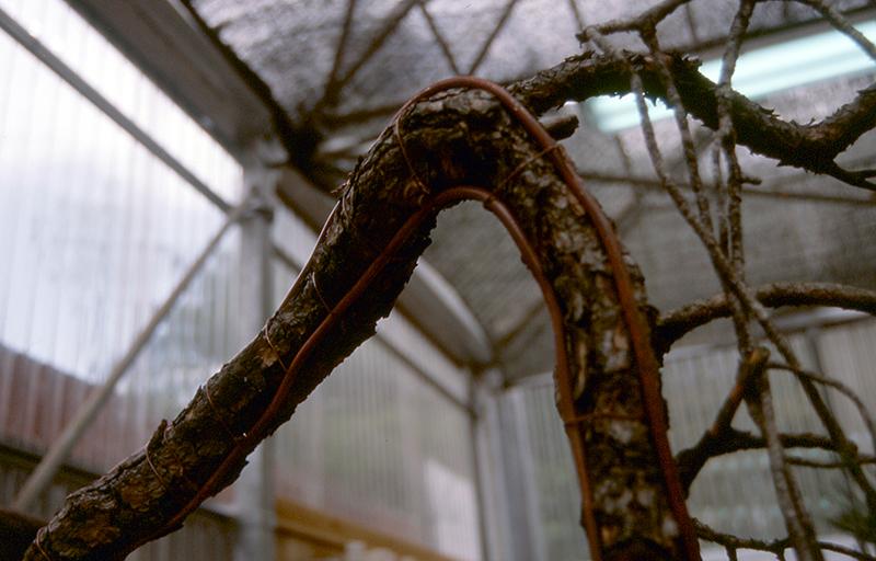curvas tronco