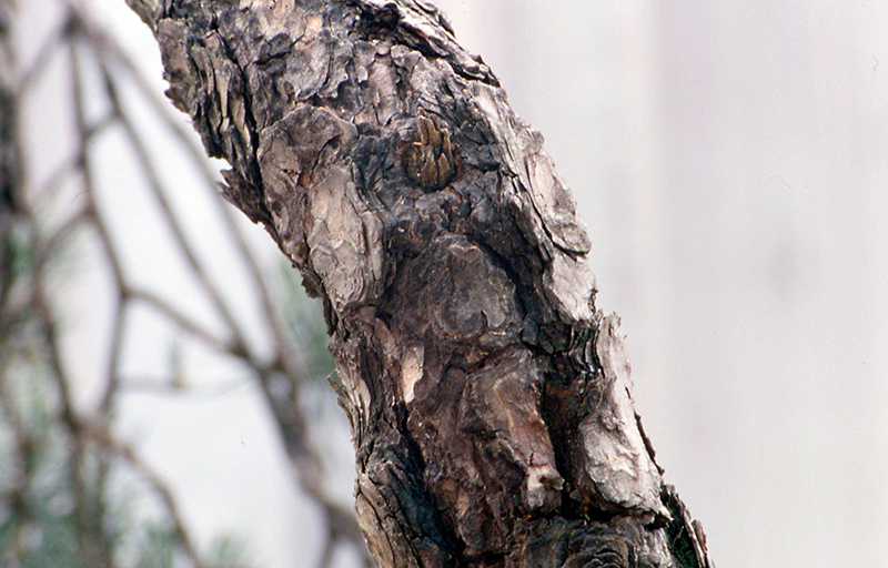 Doblado del tronco
